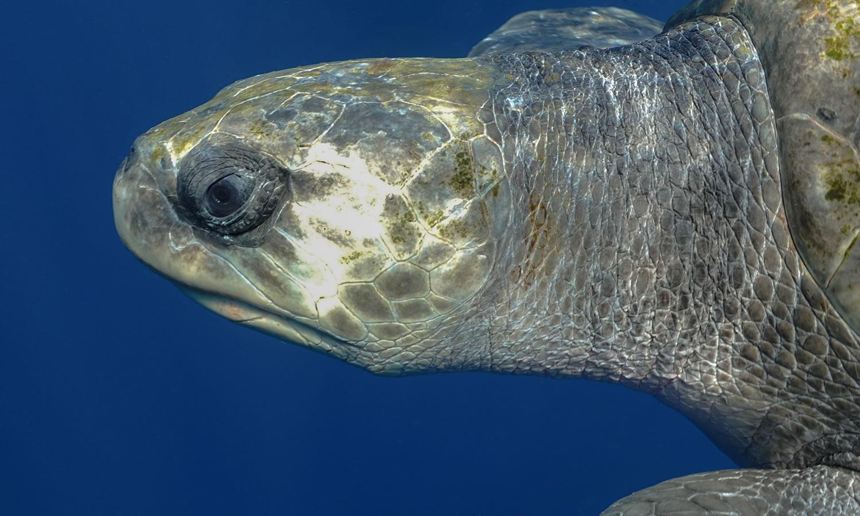 Turtles Mag Bay
